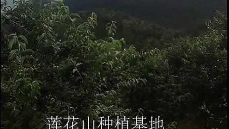 大山楂视频