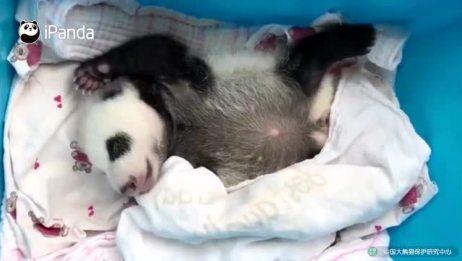 熊猫宝宝:动起来!跟着我的节奏动起来!