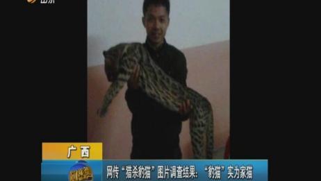 """广西:网传""""猎杀豹猫""""图片调查结果——""""豹猫""""实为家猫"""
