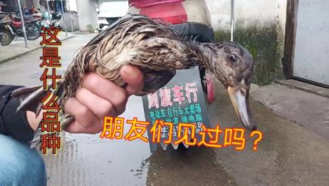 重庆妹子在宁波,特别想恋老家的味道,就做了一道,梅菜扣肉来吃