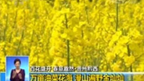 [共同关注]百花盛开 春意盎然·贵州黔西 万亩油菜花海 漫山遍野金灿灿