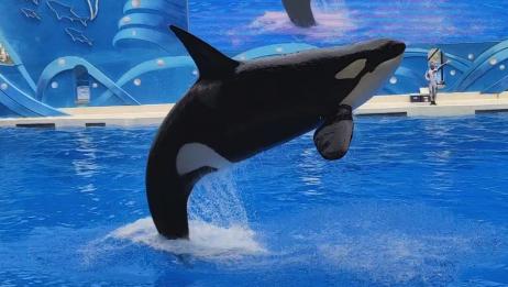 生物与环境:全球变暖影响变温动物寿命与虎鲸袭船