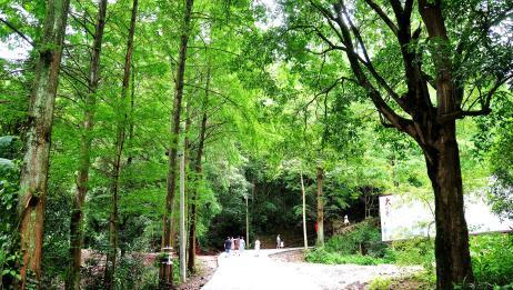 崇州街子化成山:清幽大明寺,隐藏在绿荫丛中的千年传奇