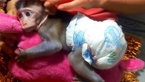 抱着玩偶不撒手的小猴子,一脸呆萌:我想念妈妈了