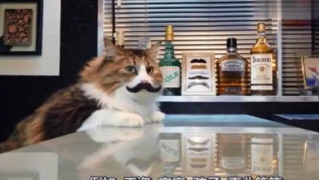 猫咪坐在酒吧里,还贴着一捋小胡子,样子让人哭笑不得