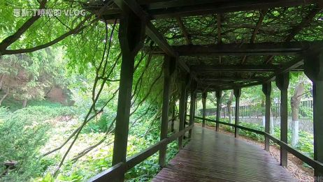 植物园也有这样的长廊,头顶都是绿色 大连植物园 20