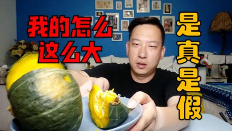 小伙是吃网红贝贝南瓜,别人一斤好几个我这一个好几斤,是真是假