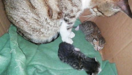 狸花猫生双胞胎,一只黑乎乎,一只黄澄澄,两只伴地走,可爱至极