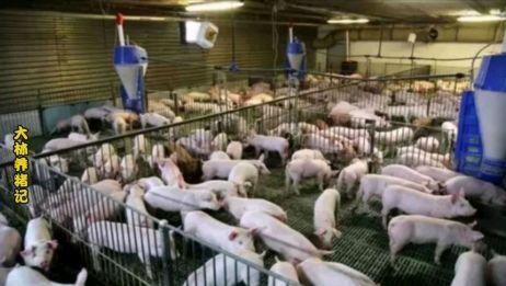 生猪价格要探底了?好消息,5月下旬猪价或迎转机