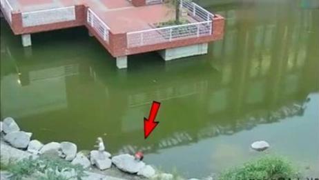 两个孩子池塘边玩耍意外落水,白衣男子一人奋力救起两个