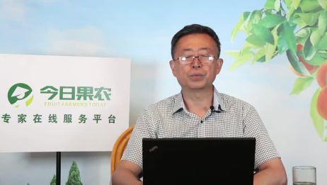 今日果农专家 果树所李秀根第六讲梨新品种与梨树种植技上
