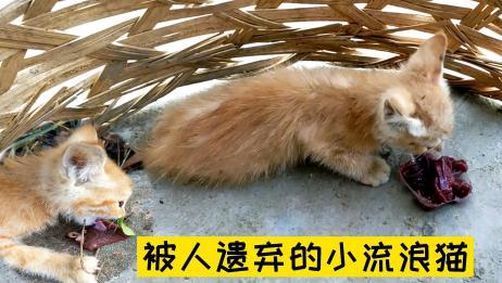 瘦柴如骨的流浪小猫,被好心小伙捡回来,开口吃饭那一刻让人流泪