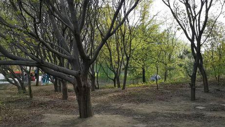 静谧的树林,只听见鸟鸣