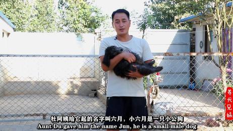 香港的朋友竟然找养犬兄妹帮忙买狗,其缘由让人倍感压力