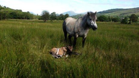 难得一见 刚出生才10分钟的小马驹 还不能站起来