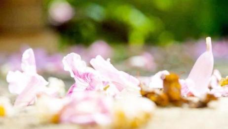 凋零的花朵还有这样的妙用,解决每家每户的难题,不知道太可惜了