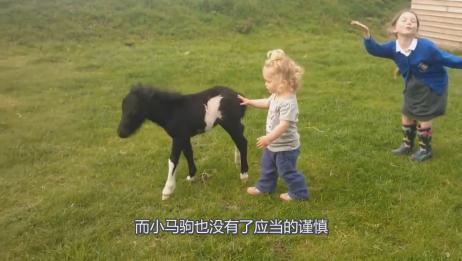 刚出生的小马驹,与两个萌妹相处,网友:颜值果然重要