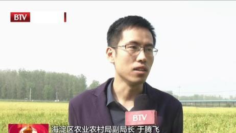"""2020年海淀区""""中国农民丰收节""""开幕丨北京台"""