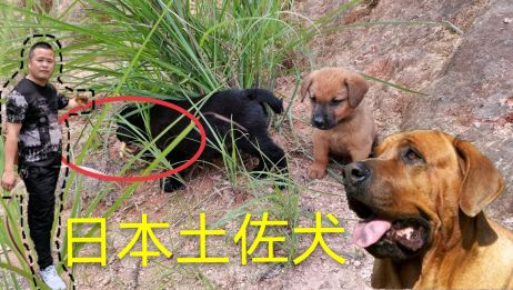 狗妈妈生下13只狗崽,当看到狗崽的行为时,狗主人怒火冲天