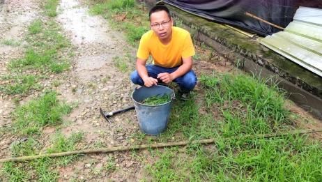 小伙教你养蚯蚓,1个废桶1堆枯草,学会后钓鱼不用买蚯蚓