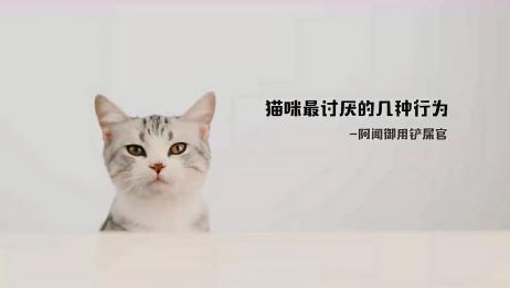 猫咪最讨厌的几种行为