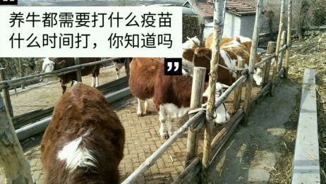 东北养牛专业户,分享养牛都需要打什么疫苗,什么时间打你知道吗