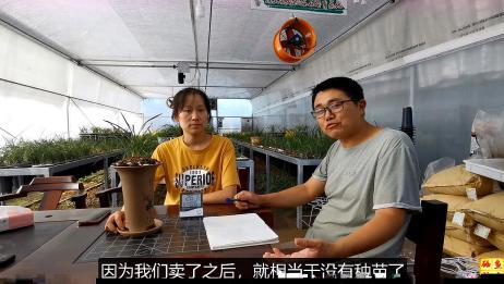蕙兰边草终于分完了,兰花种了150盆,卖了一万多块