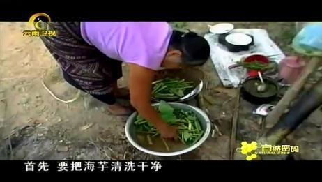 海芋有毒!采摘海芋不当皮肤接触易引瘙痒,当地采摘方法世代相传