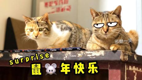 猫咪母女约定早晚各送铲屎官一只小老鼠,主人:大家鼠年快乐