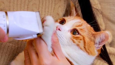 猫咪被剃脚毛,爪子奇痒暴跳如雷,直接撕烂了猫包