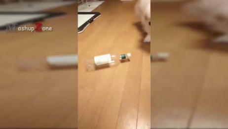 地上放着一个瓶子,小狗好奇靠近,在地上推着瓶子玩的开心!