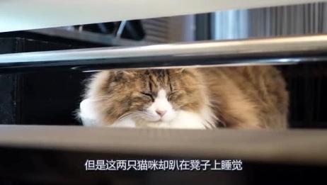猫咪跑到酒吧消遣,却坐在椅子上发愣,你俩是不是找错地方了?