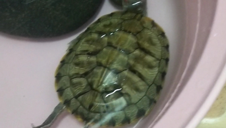 冬眠的小乌龟,怎么和我想得不一样呢?