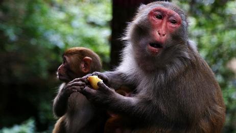 """属猴人的""""后半辈子"""",尤其是68、80、92年的!你是否也在其中呢"""