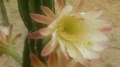 植物园中的<沙生植物>