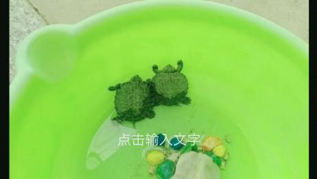 小乌龟冬眠了,睡着的样子好可爱。我看完了,你呢?