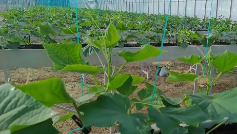 掌握好方法,无土栽培施肥很简单,不复杂