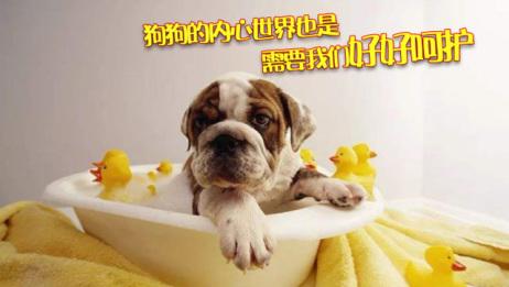 狗狗也有情绪的,让医生教你怎么照顾它!