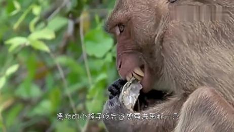 猴子趁主人不在家,和猫咪对螃蟹下起黑手,下一秒大家忍住别笑!
