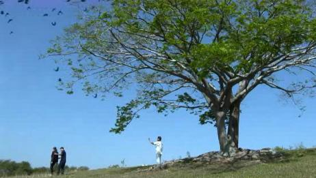 为了节约资源,这里七十岁以上的老人,都会被送给山上的乌鸦