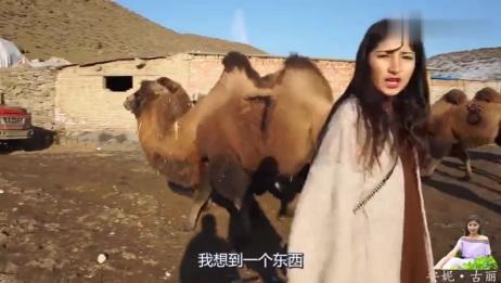 新疆骆驼奶喝过吗?价格是牛奶的近10倍,却为何好多人排队来买?