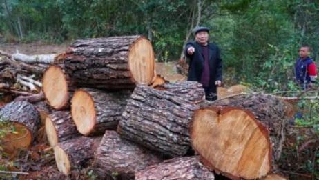 农夫山泉被举报毁林取水,官方回应:已立案调查