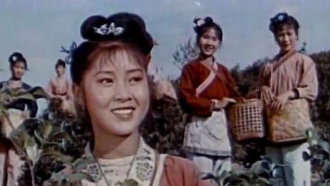 刘三姐唱起采茶歌,采茶采到茶花开,满山皆岭一片白