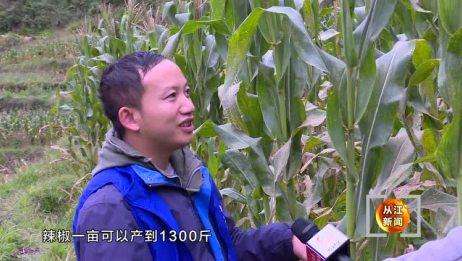 高增村:循环种植农作物 亩产纯收入7000元