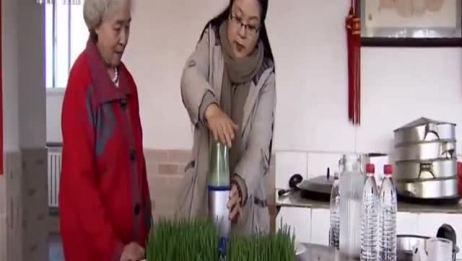 大妈爱干净,用纸种菜,在纸上种出了200多种蔬菜