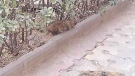 喂猫粮偶遇一只小猫,一只黑猫和一只玳瑁,结果只有小猫肯吃猫粮