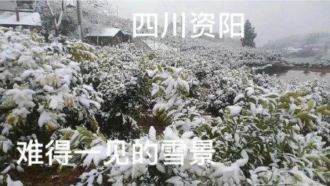四川资阳难得一见的大雪,到处都是白茫茫的一片