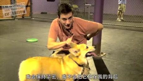 短短三分钟教你如何训练自己的狗狗