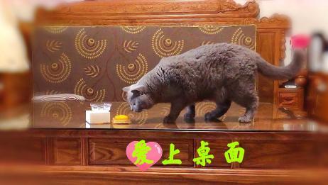 猫咪老爱上桌子好烦,假打能改掉它的坏习惯吗?