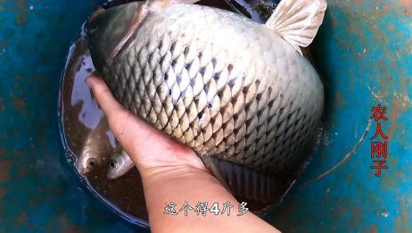 大哥在农村水湾逮到大鱼,逮了70斤,这种野生大鲶鱼最少见